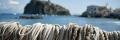 nasse pescatori Ischia