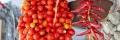 piennolo pomodori Ischia
